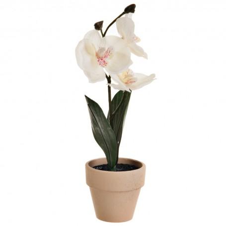 Mini Orquídea con maceta