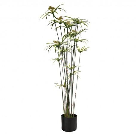Planta con flor grande y maceta Haus