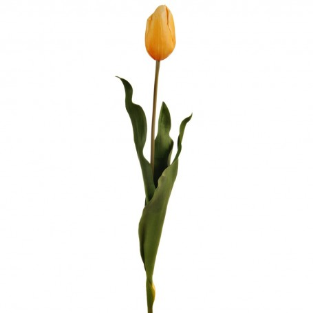 Flor Tulipán Holandés Haus