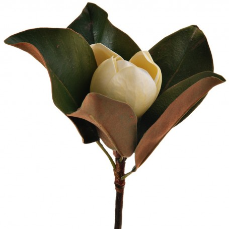 Flor Magnolia Amarillo Haus