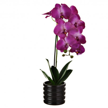 Arreglo Orquídea Morado con maceta  Haus