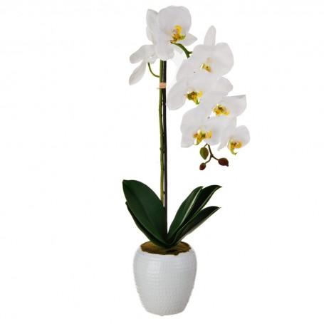 Arreglo Orquídea Blanco con maceta Haus