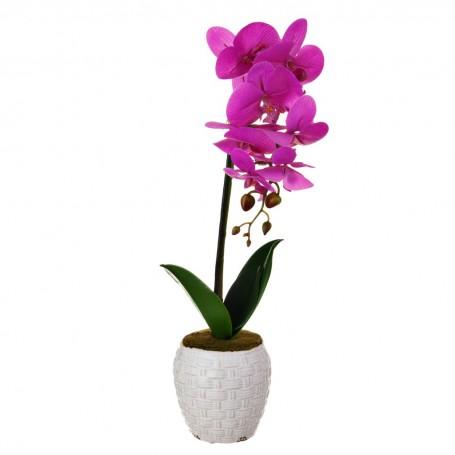 Arreglo Orquídea Lila con maceta Haus