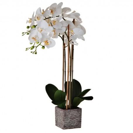 Arreglo Flor Orquídea Blanco con maceta textura Haus