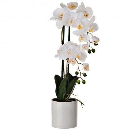 Arreglo Flor Orquídea Blanco con maceta Haus