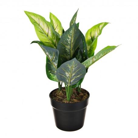 Planta Diefrenbachia con maceta Haus