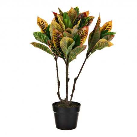 Planta Croton con maceta Haus
