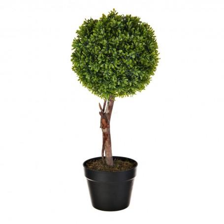 Planta Boxwood con maceta Haus