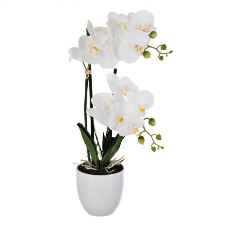 Arreglo Flor Orquídea Blanco con maceta Blanco Haus