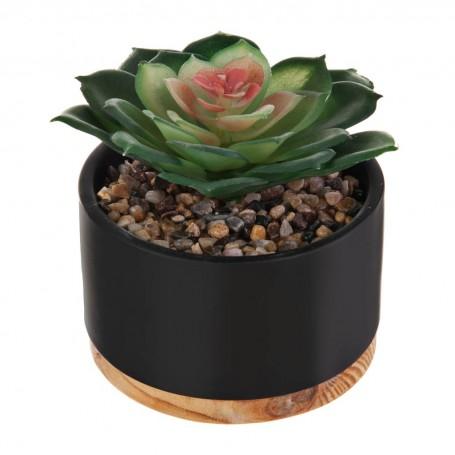 Mini planta suculenta con maceta y base de madera