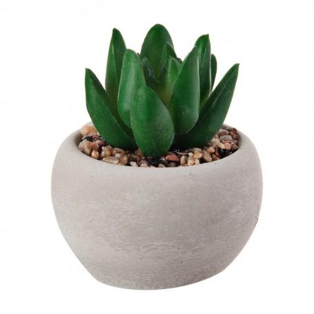 Extra mini planta suculenta con maceta gris