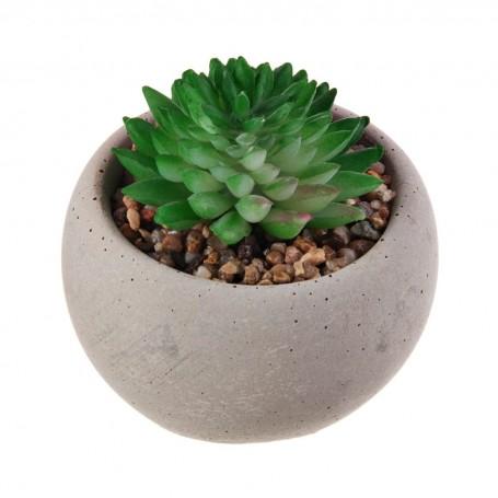 Extra mini planta suculenta botón con maceta