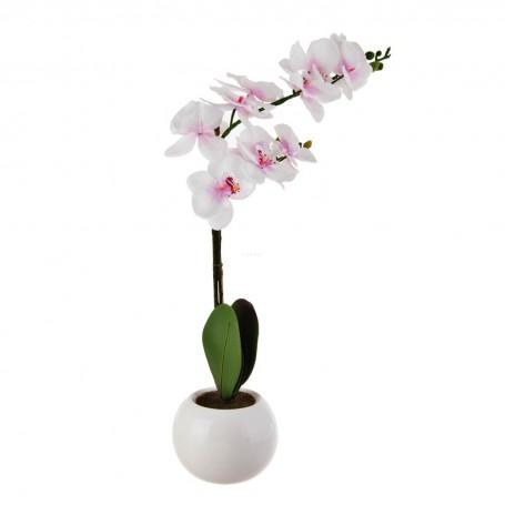 Planta Orquídea con maceta blanca