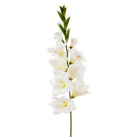 Flor Gladiolo