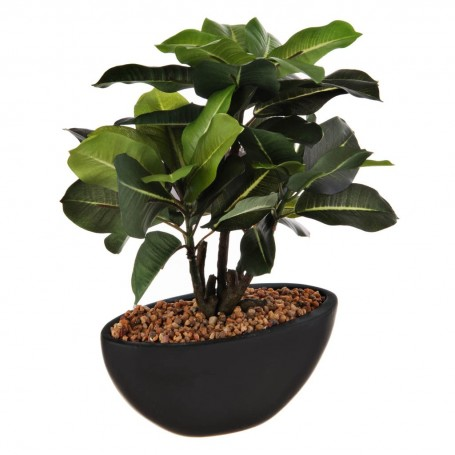 Planta Quercineas con maceta