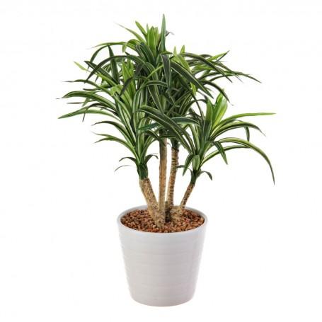 Planta Yucca con maceta