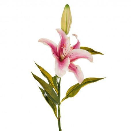 Flor Lily Lilium Haus