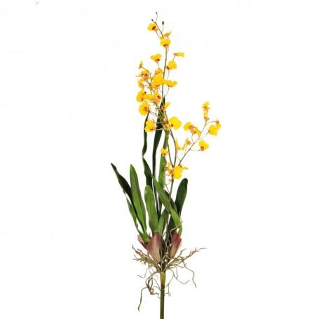 Flor Orquídea Danding Oncidium Haus