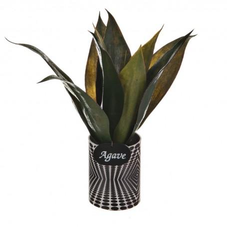 Planta Agave con maceta Haus