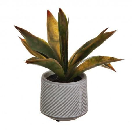 Planta Agave con maceta blanco / gris Haus