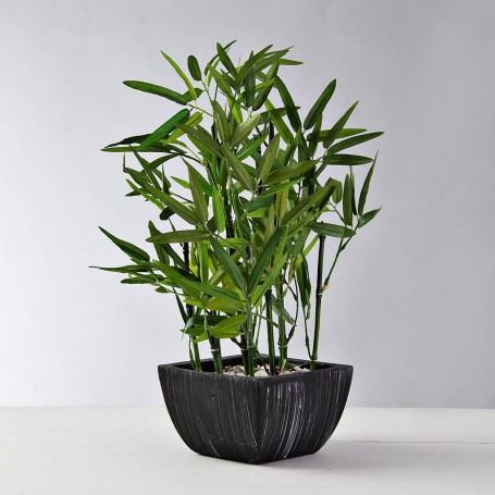 Planta Bamboo con piedras y maceta Haus