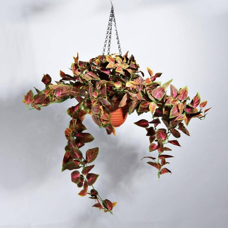 Planta Hojas Verde / Fucsia con maceta colgante Haus