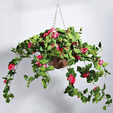 Planta Geranio Fucsia con maceta colgante Haus