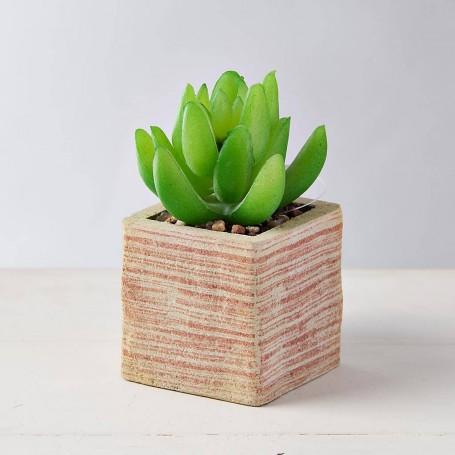 Mini planta suculenta con macetero Crudo / Naranja