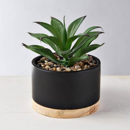 Mini planta suculenta con macetero Negro / Natural