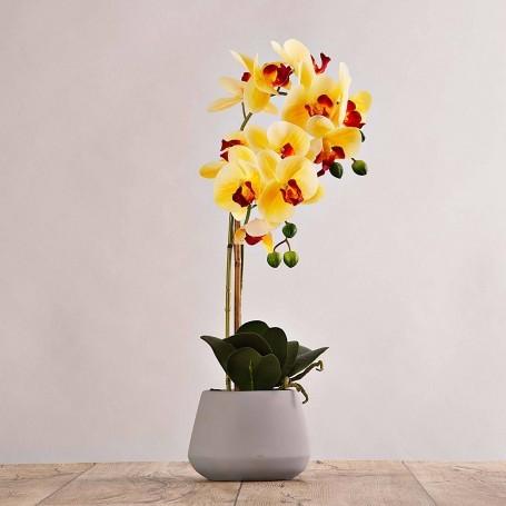 Arreglo Flor Orquídea con maceta gris Haus