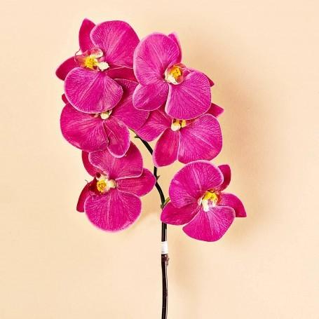 Flor Orquídea Fucsia x6 Haus