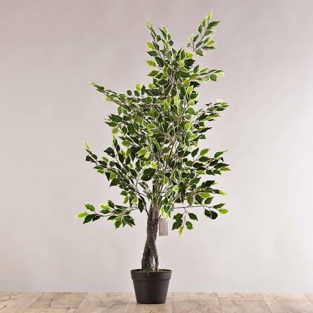 Planta Ficus con maceta negra Haus