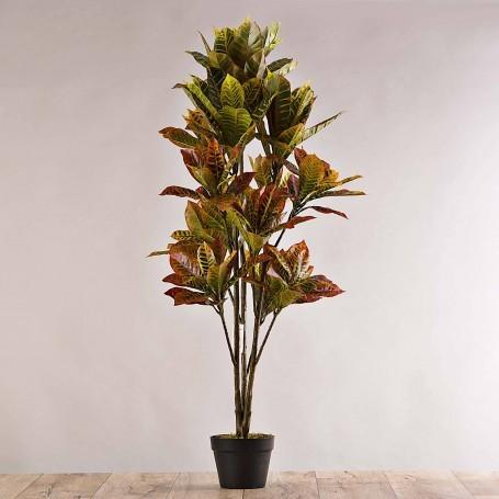 Planta Croton con maceta negra Haus