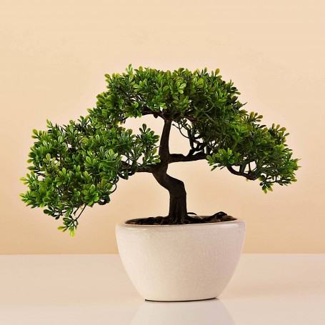 Planta Bonsai con maceta Haus