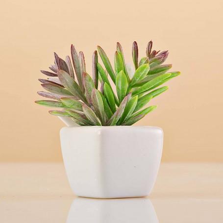 Mini planta artificial Verde / Rojo con maceta cuadrada Haus