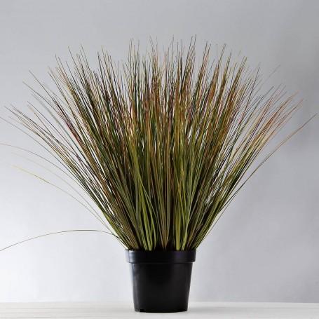 Planta Espiga con maceta Haus