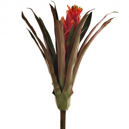 Flor Scarlet Bromeliad Haus