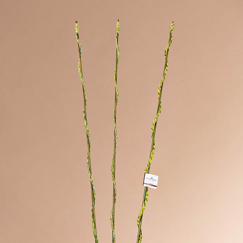 Juego de 3 ramas Bambú Tornillo Belinda Flowers