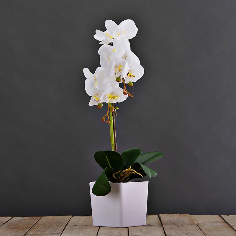 Arreglo Orquídea con maceta Haus