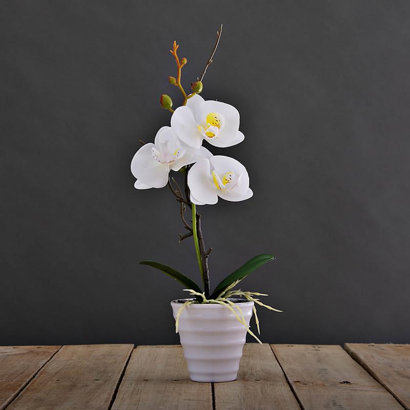Arreglo Mini Orquídea con maceta Haus