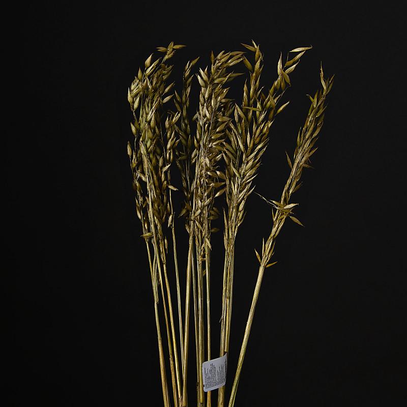 Rama Gotitas Belinda Flowers