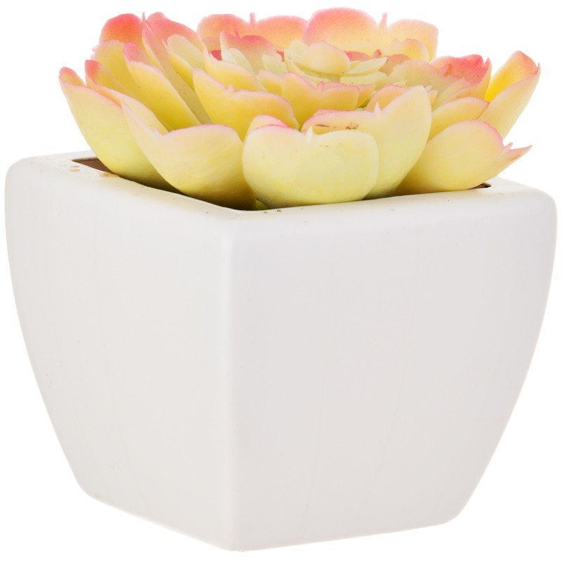 Planta bicolor decorativa