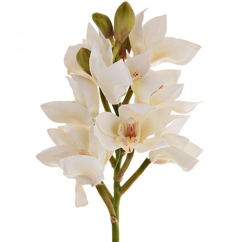 Flor Orchid Cymbidium Haus