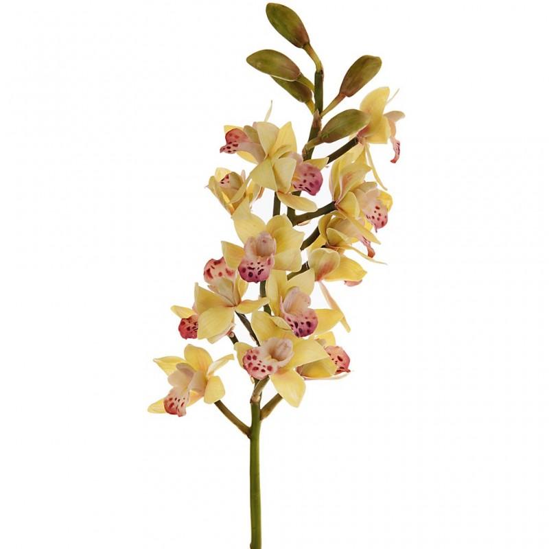 Flor Orchid Cluster Cymbidium Haus