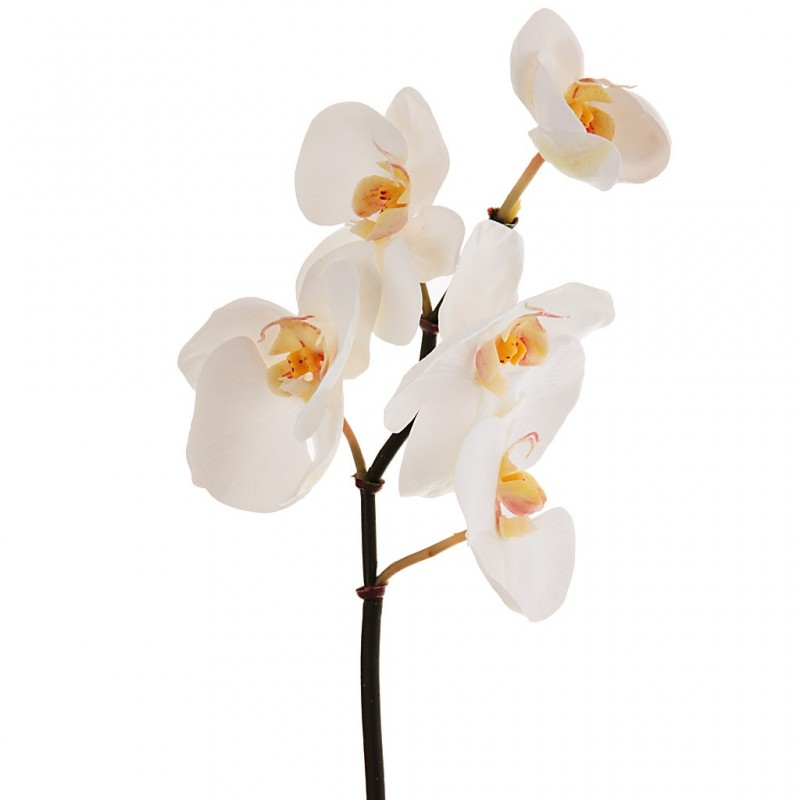 Flor mini Orchid Phalaenopsis x5 Haus