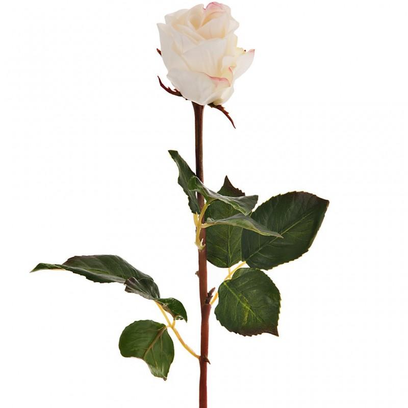 Flor rosa Haus