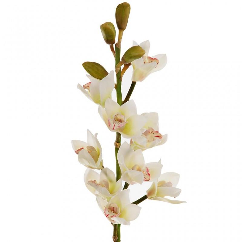 Flor Orquídea Cymbidium Open Haus