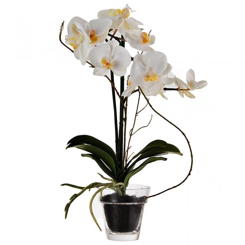 Arreglo floral Orquídeas Phalaenopsis con florero de vidrio Haus