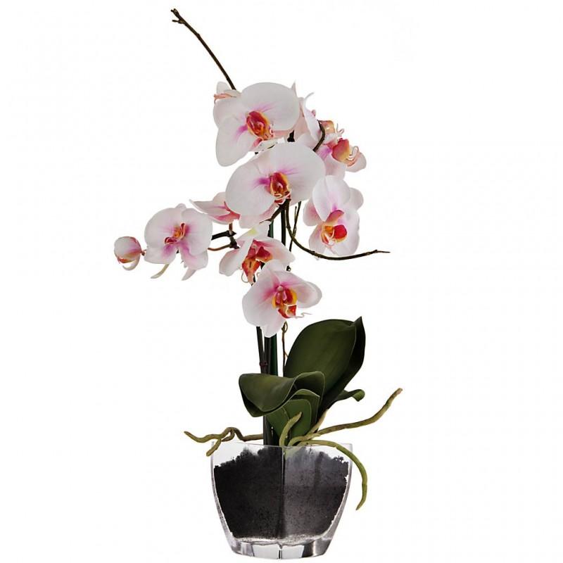 Arreglo floral Orquídeas Phalaenopsis Rosa con florero de vidrio Haus
