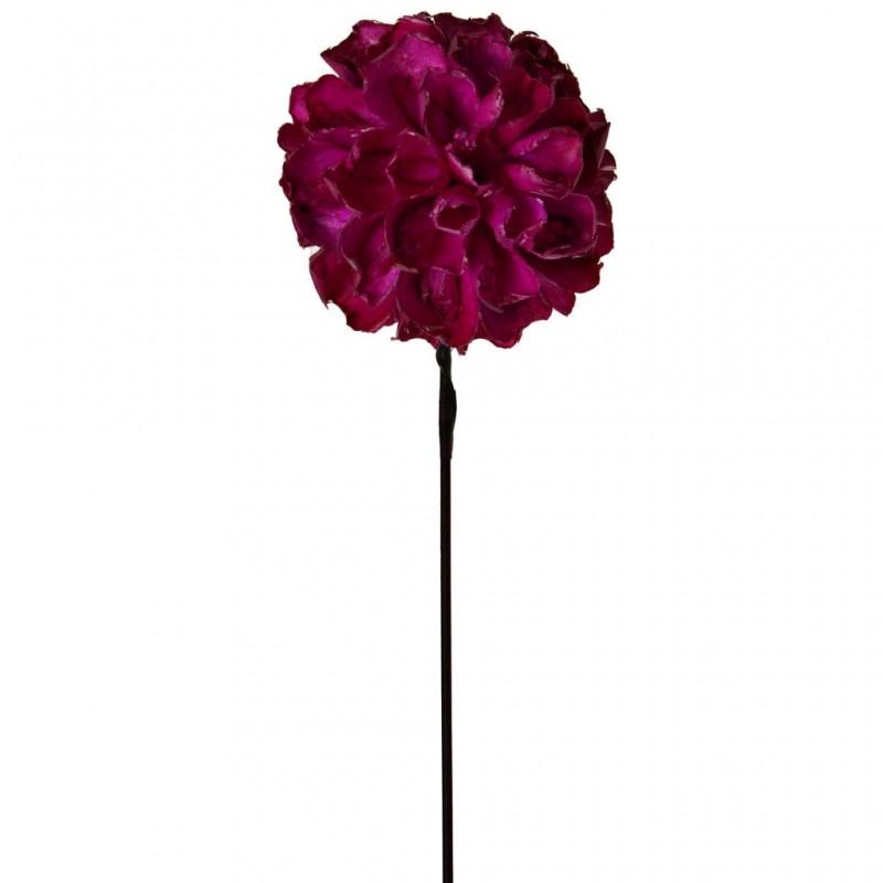 Flor Inti Belinda Flowers